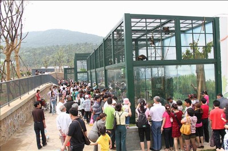 园区的整体布局:先进游乐场,再入动物园。整个园区占地52万平方米,分为24个展区,游览全程需4-6个小时。除了从游园区到动物园区的路程比较长,各个动物场馆间的平均步行时间都在3分钟左右。而且为方便参观,新园已经设计了多处人性化设施,其中一条长度近600米的游览火车轨道已铺设完毕,今后游人可通过电动火车从游乐区摆渡到动物园区,分割两个功能区的山体上,正在架设观光扶手电梯,建成后不仅提供了不同的观光视角,还能节约游客体力。