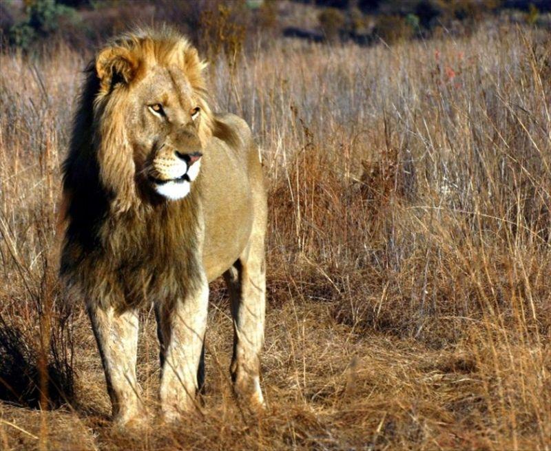 南②居委 【旅游】 线路介绍 游记攻略 拼团户外 无锡动物园明星动物