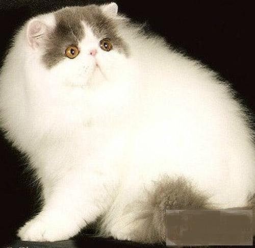壁纸 动物 狗 狗狗 猫 猫咪 小猫 桌面 500_486
